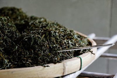 black-tea-production