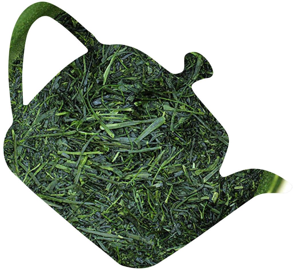 te verde japones