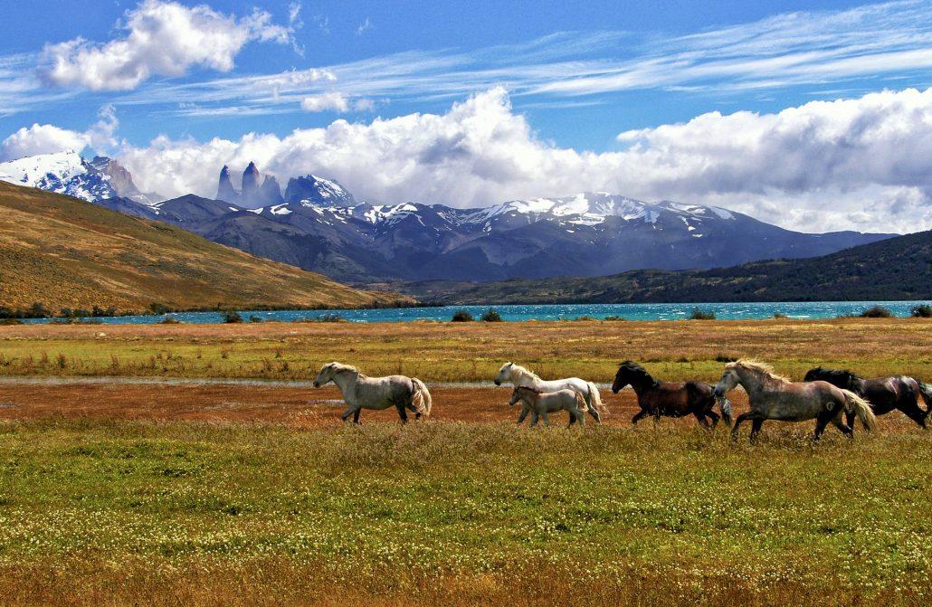 caballos corrriendo por un prado